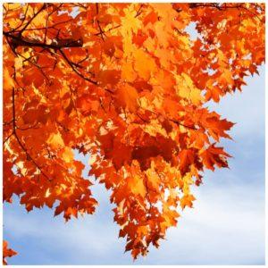 Fall Colors in Minneapolis – Beautiful Pictures Alert!